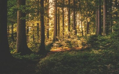 Engagiere dich! Baumpflanztag im Aargauer Jura (Mini-Workcamp)